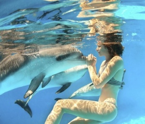 Swimming With Dolphins.  Image: bucketlist.org